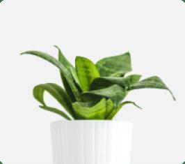 img-tanaman-1-2.png