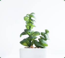 img-tanaman-1-3.png